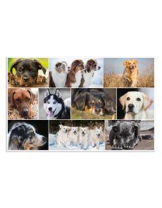 Подложка за бюро Herma, 55x35 cm, кучета