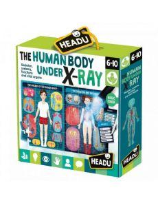 Човешкото тяло под рентген – Монтесори